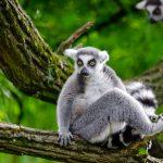 10 sites touristiques à visiter à Madagascar